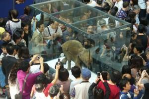 Мамонтёнок Люба снова в музее