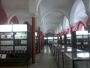 Зоологический музей МГУ 2014